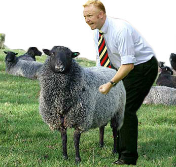 Big Eck Shagging Sheep