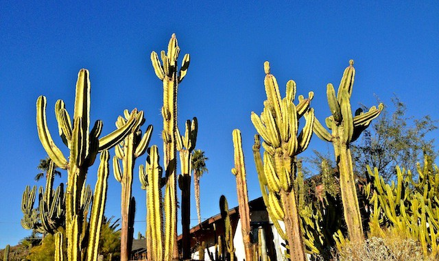 Sunnyslope cactus forest