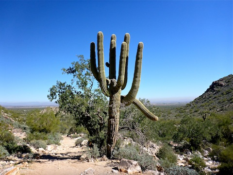 Another odd saguaro; Phoenix smog in the background.