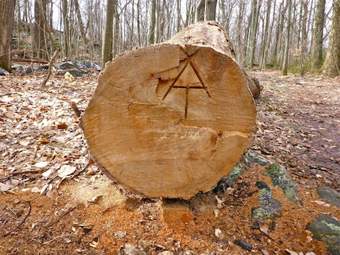 Appalachian Trail symbol carved into an old tree.