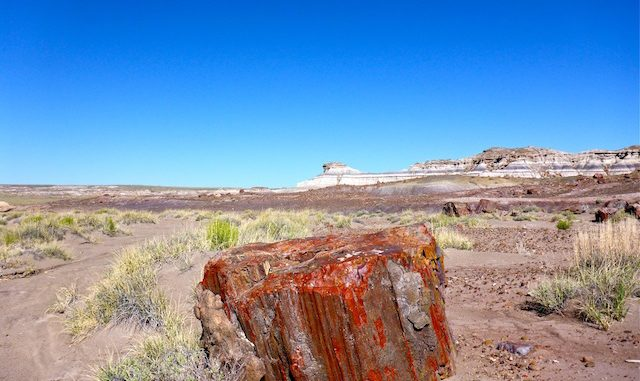 One of uncountable large specimens of petrified wood. Looking towards First Forest Point.