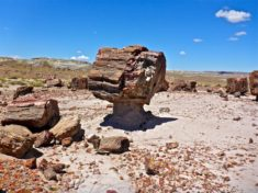 "I saw several ""musroom rocks"" in this small grove of petrified wood a quarter mile north of the OP."