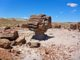 """I saw several """"musroom rocks"""" in this small grove of petrified wood a quarter mile north of the OP."""