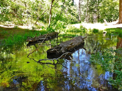 I love the vegetation's shimmering reflection in Horton Creek.