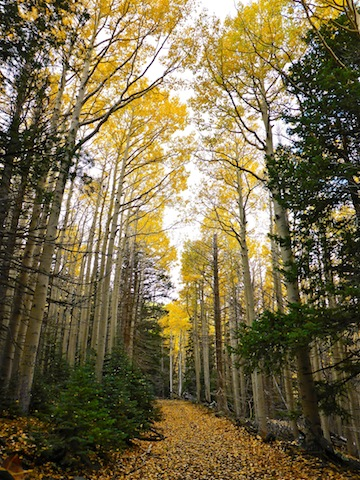 Aspen cathedral on Waterline Road.