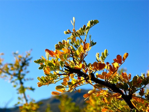 Surprising fall color on the Mazatzal Mountains lower slopes.