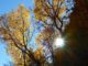 If I hadn't looked back, I wouldn't gave caught this sun burst illuminating very late fall color in Oak Creek Canyon.