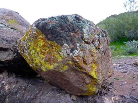 There's at least four different types of lichen on this boulder.