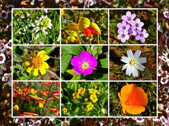 Just 10 of the at least 15 species of flowers I found between Crown King Rd. and Bumble Bee.