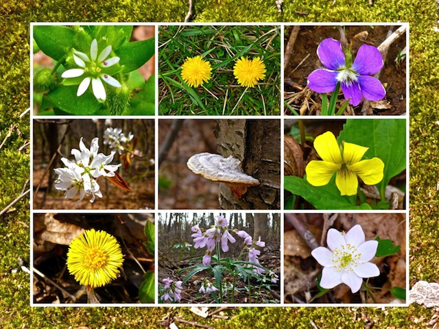 Eight more species of flowers than I have ever before spotted on the Appalachian Trail.