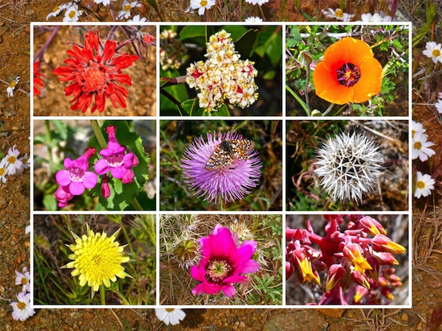 Ten of the more than two dozen flower species I photographed. (Watch the video, below!)