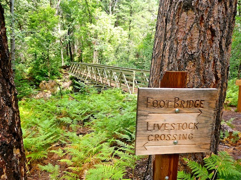 The Bearfoot Bridge over Pine Creek is just north of Camp Lo Mia.