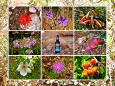 Not a whole lot of flowers on the Black Hills Loop, but just enough for a collage if I throw in a trail beer.