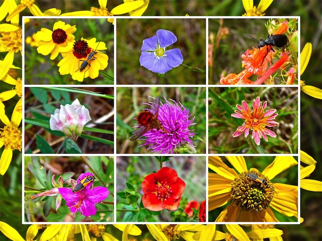 Lots of bugs in this hike's flower collage. Can you spot them all?