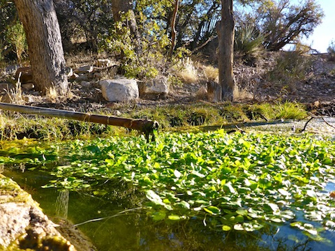 White Rock Spring is only 200 yards from the White Rock Trailhead.