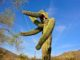 My favorite saguaro pic of the day.