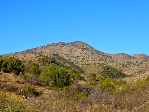 Looking up at Scott Mountain from Dripping Springs Rd.