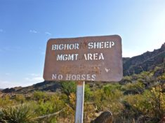Thankfully, no Big Horny Sheep took an interest in me.