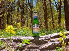 Beer and spreadfruit goldenbanner flowers at Double Springs Campground.